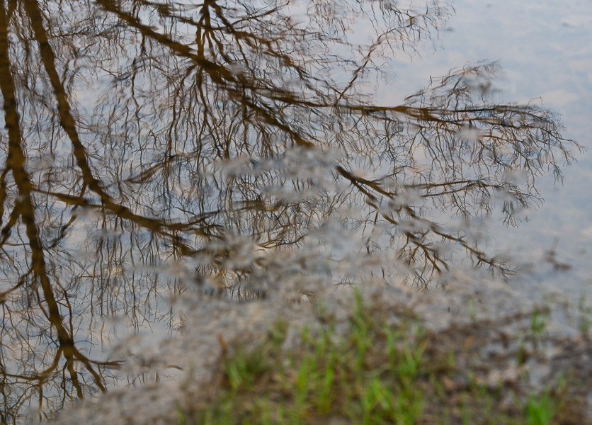 1/366: Reflections in Bluemont Park