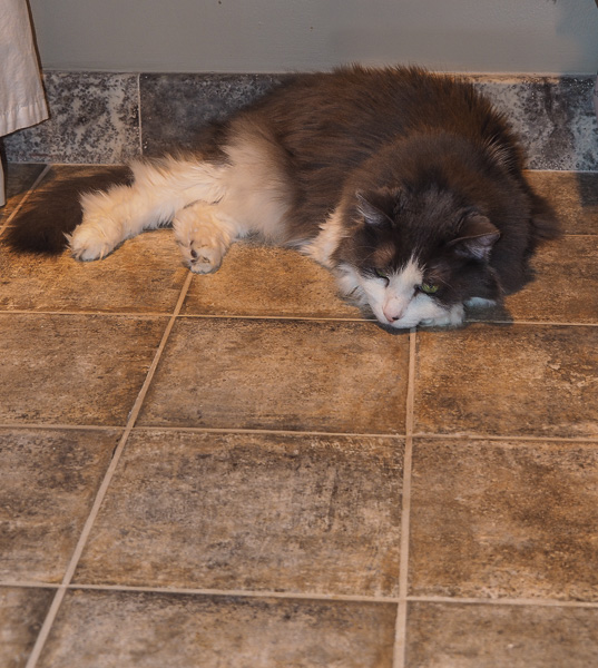"7/366: ""Wow -- I'm SURE happy that my human put a heated floor in the bathroom when she remodeled,"" said Kozy Kid Kito"